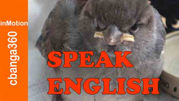 Yes Speak English Please