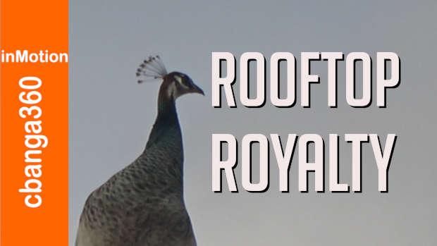 Rooftop Royalty #shorts