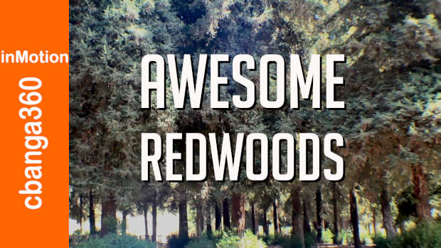 AWESOME  REDWOODS LIVE LONG #shorts
