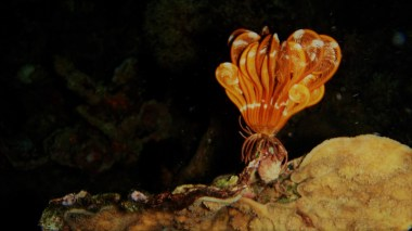 A feather star closed during night