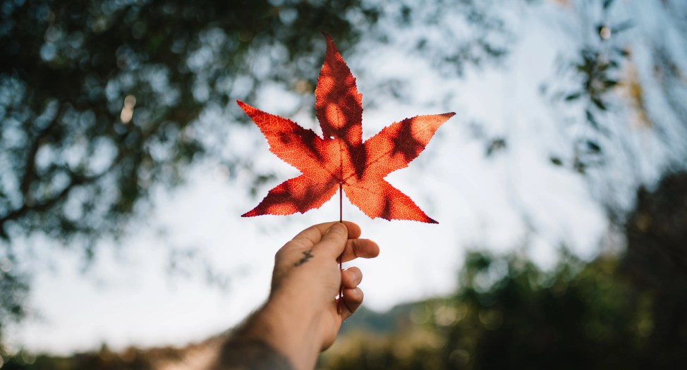 CBD ISLAND   大麻由来のCBDオイルの可能性を探るブログ