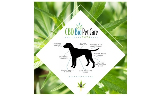 CBD is great for skittish dogs