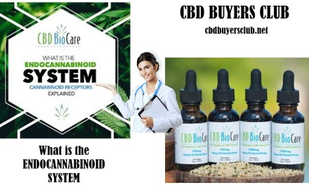 CBD BIOCARE AND THE ENDOCANNABINOID SYSTEM