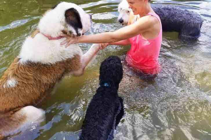 Angela_Molly_StBernard_CBD_Dog_Health