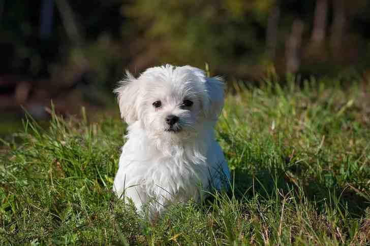 CBD Dog Health Dog In Yard
