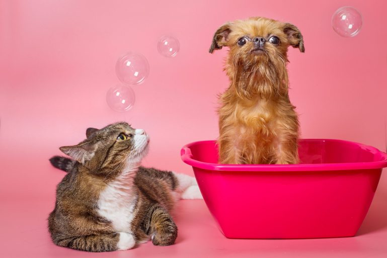 Is THC safe for pets? Infusing pets with the CBD promise