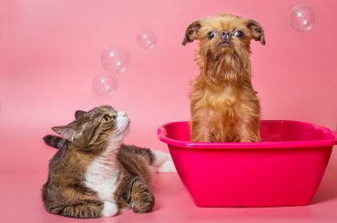 Is thc safe for pets?