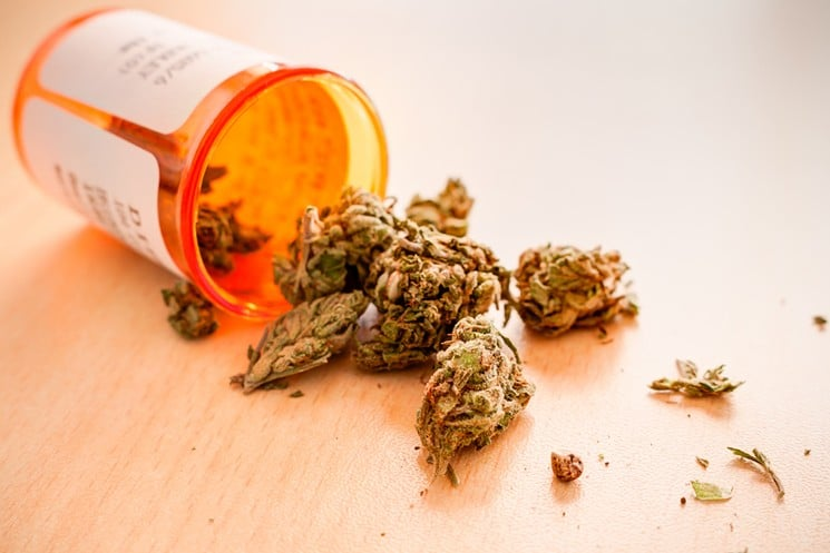medicininės kanapės - marihuana