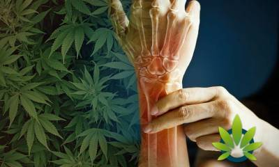 is cbd good for bone health