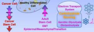 Dr. Bob Melamede Stem & Cancer Cell Metabolism