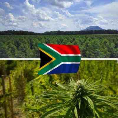Buy CBD in SA
