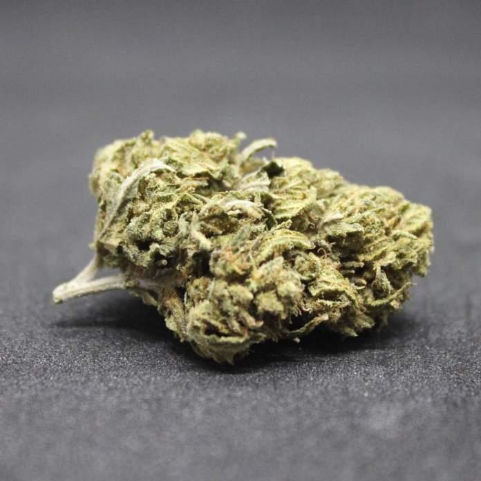 Hemp Flowers UK - Mango Haze. Great low cost CBD bud.