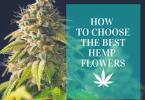How to choose the best hemp flowers