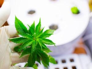 Medical cannabis regulations