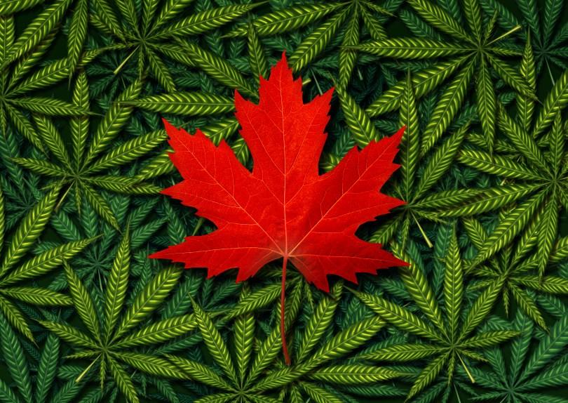 canada cannabis demand
