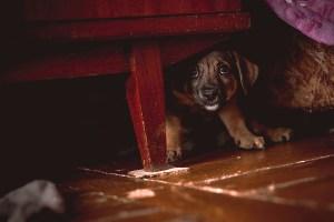 cbd pets risks