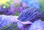 hemp herbs