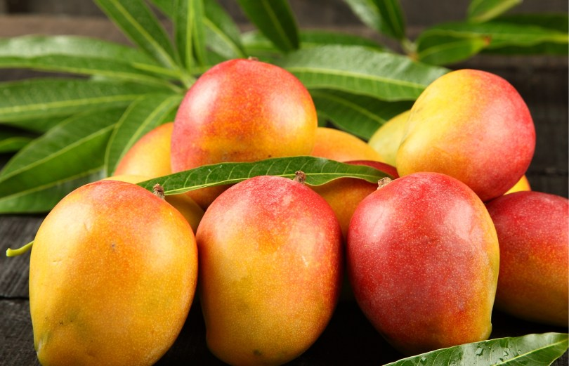 cannabis mangoes
