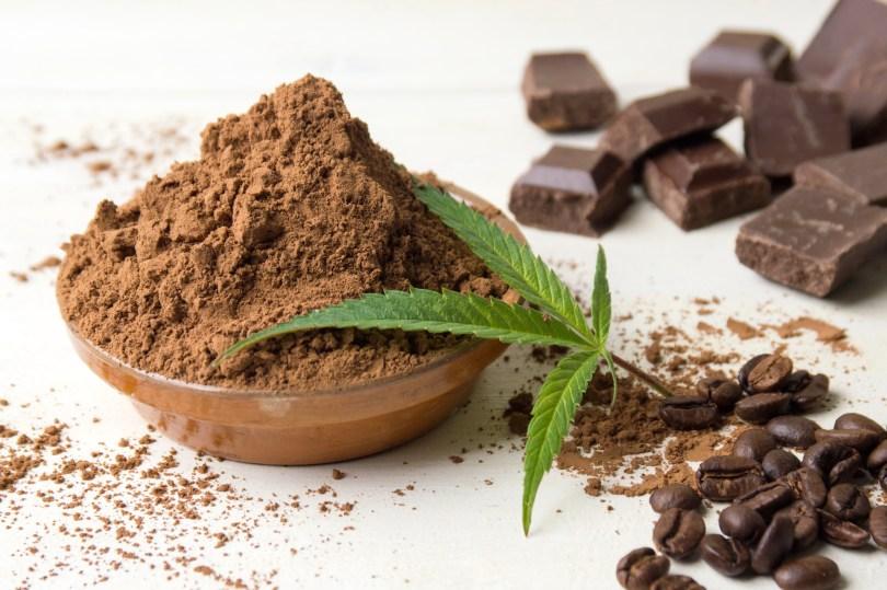 chocolate thc