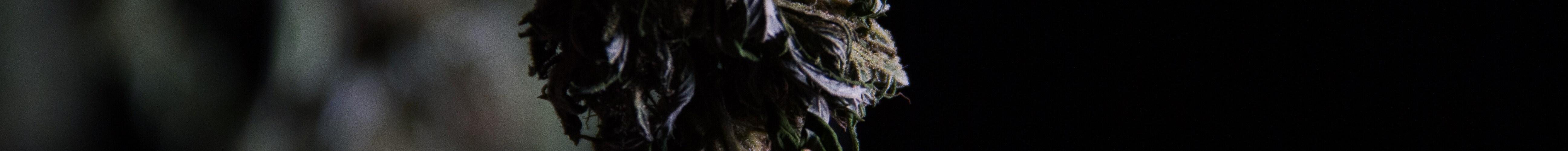 canada cannabis quality