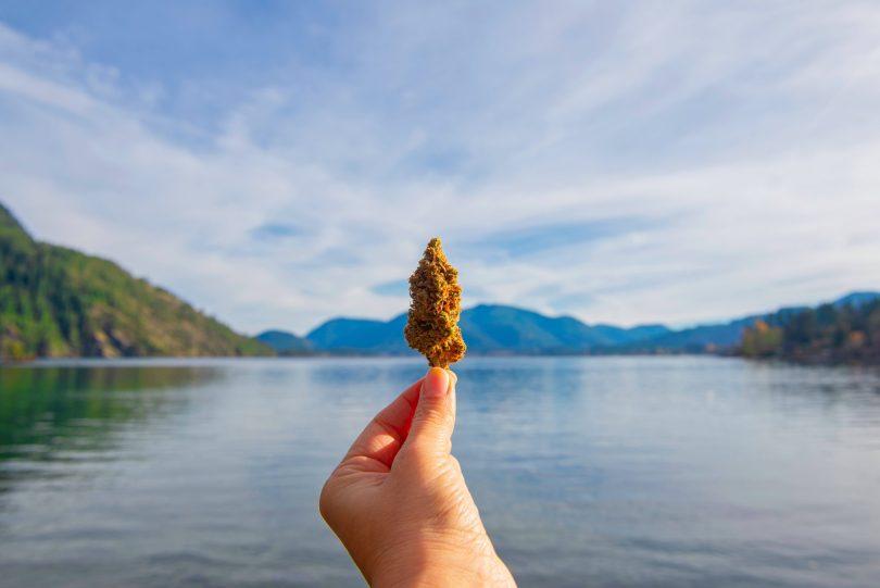 medical cannabis tourism