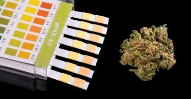 delta 8 drug test