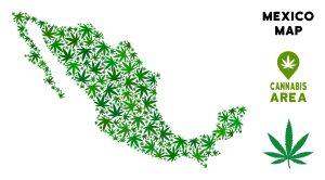 Mexico biggest legal cannabis market
