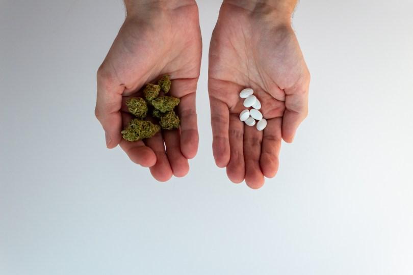 cannabis antibiotics