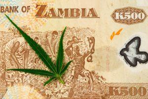 cannabis export market