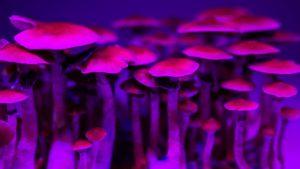 medical psychedelics