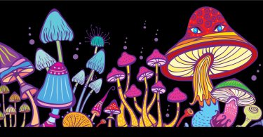 psychedelic tourism
