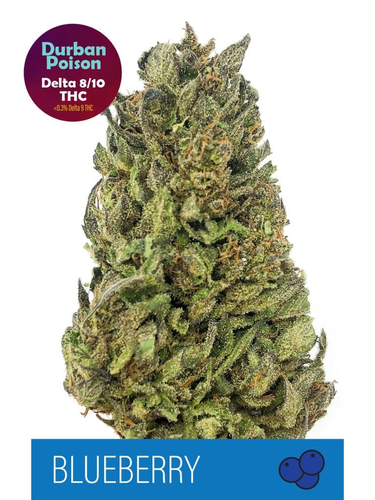Blueberry Durban Poson Delta 8 + Delta 10 Hybrid Flower