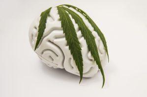 cannabis answer opioid epidemic