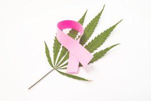 cannabis kill cancer