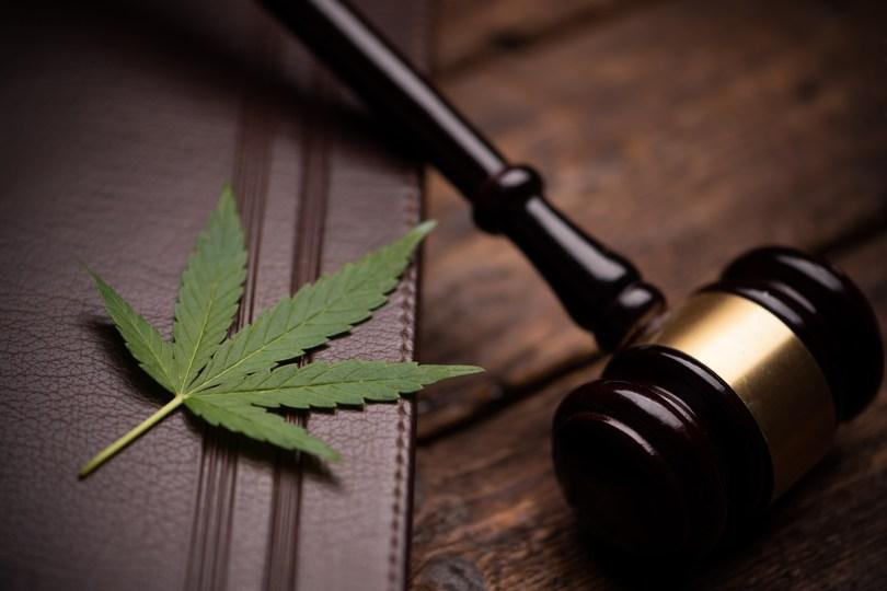 cannabis in parliament