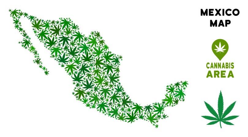 Mexico cannabis