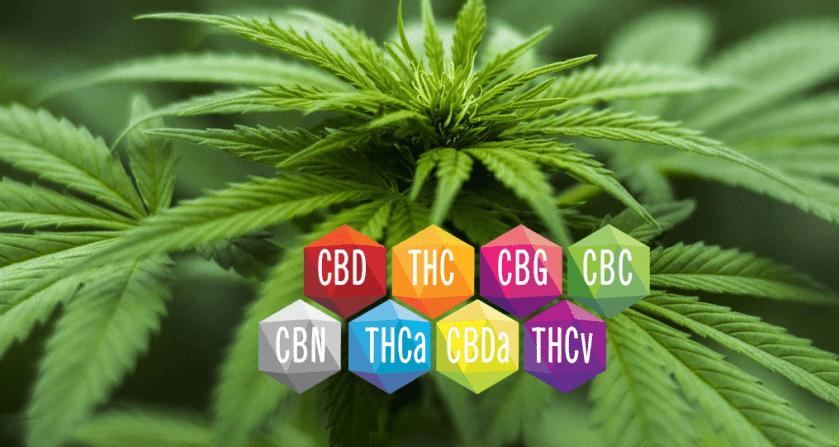 full spectrum CBD cannabinoids