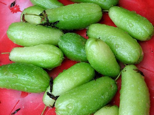 eggplant-thai-green-oblong