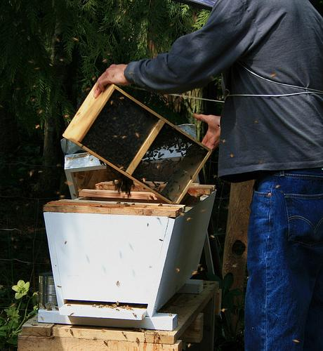 Typical Beehive in Modern USA
