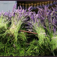 Parsley, Sage, Rosemary and Thyme ... and Lavender