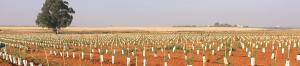 Plantaciones intensivas de almendro realizadas por CBH.