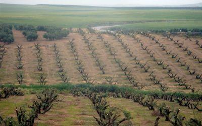 Plantaciones de olivar ecológicas
