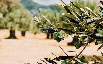 Fertilización del olivar