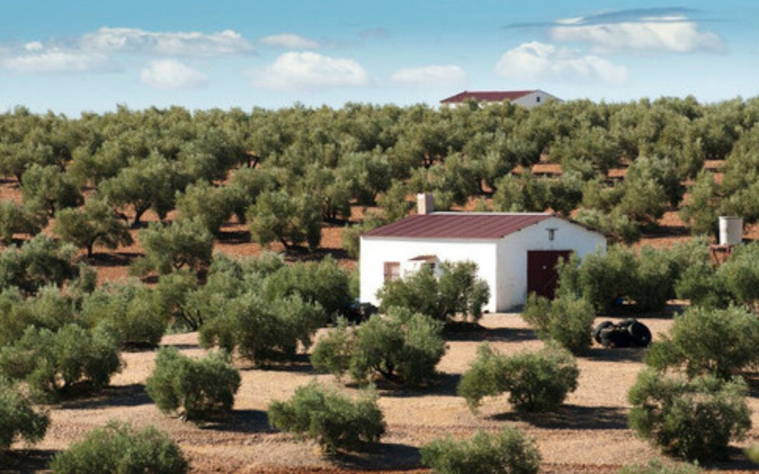 Valoración de Fincas Rústicas en Andalucía