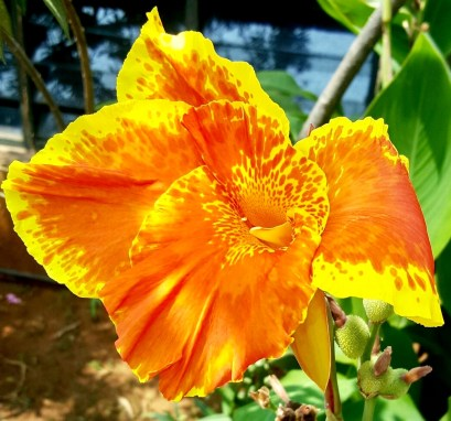 Fiery orange-yellow flower seems to represent the sun