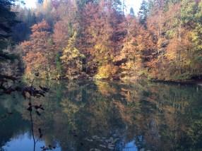 pfaffikonwaldsee