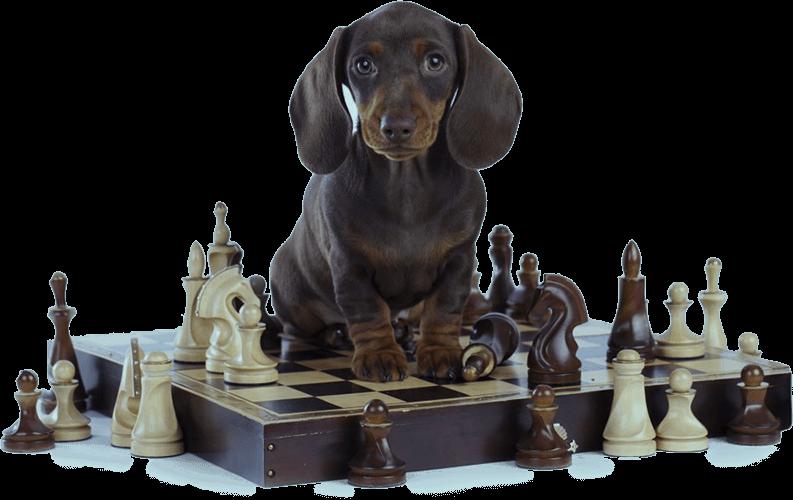 dog chess