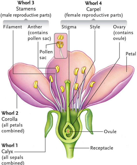 Parts of a Flowering Plant2