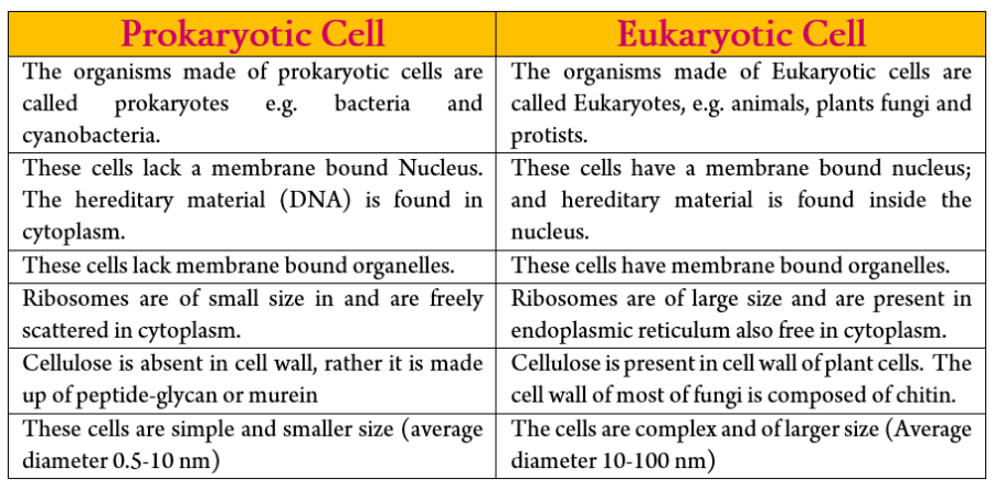 Prokaryotic and Eukaryotic Cell