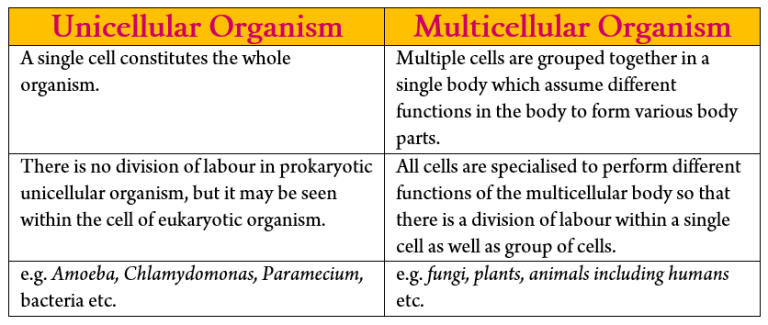 Unicellular and Multicellular Organism_differences